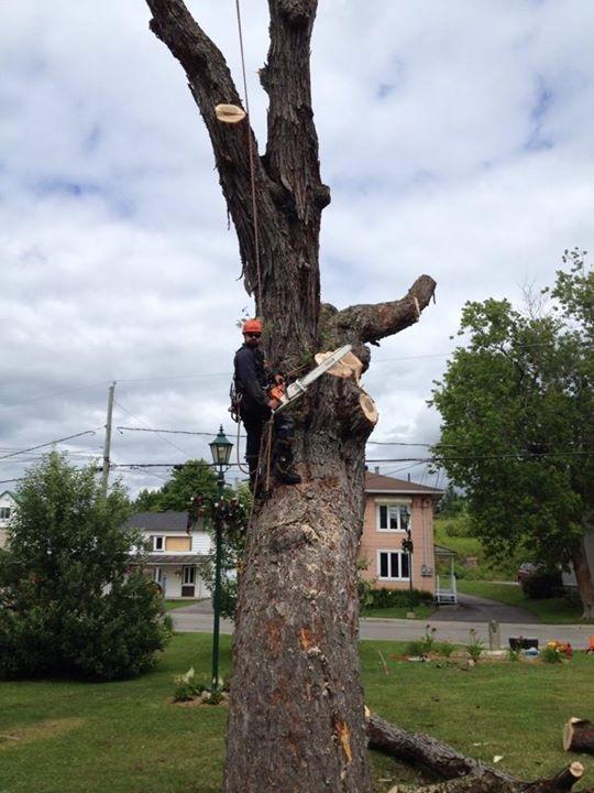 coupe arbre