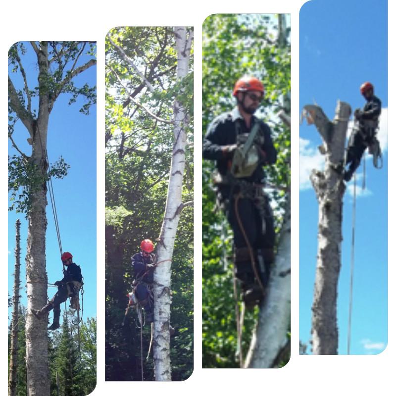 arboriculteur-arbre-lanaudiere