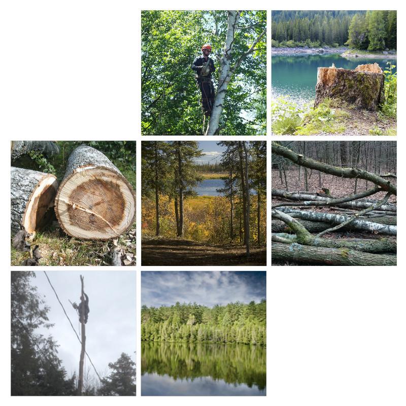 bois-forest-arbres