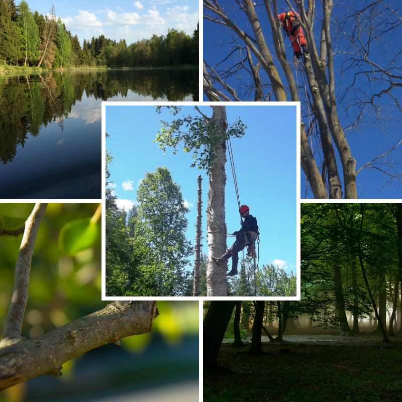elagage-arbre-foret