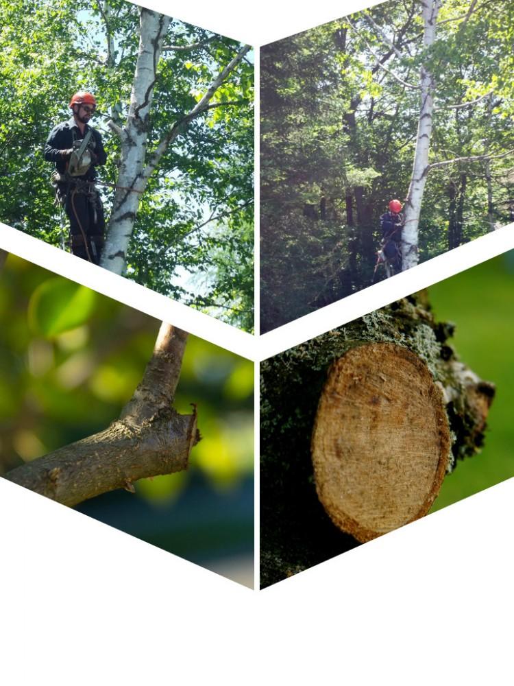 arboriculteur-elagage-emondeur