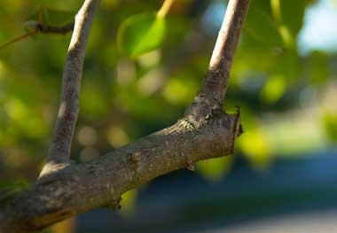 abattage arbre rawdon